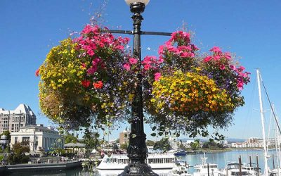 The Hanging Baskets in Victoria mark the beginning of summer