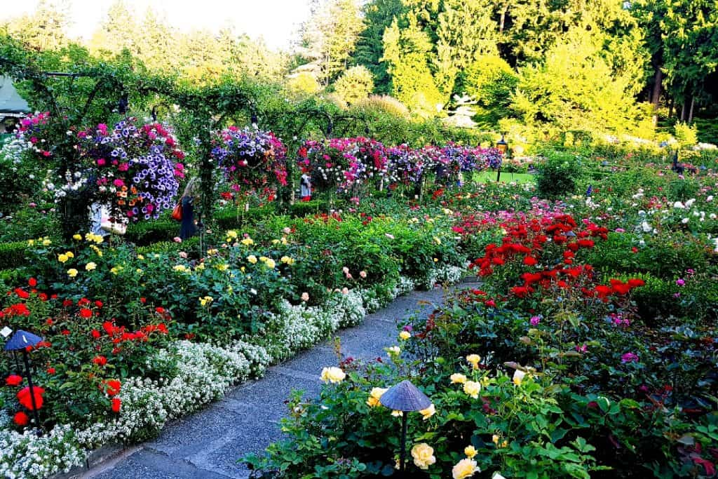 Rose Garden at Butchart