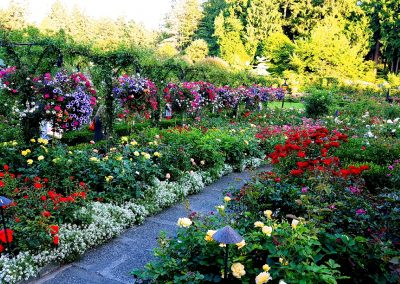 Rose Garden at Butchart