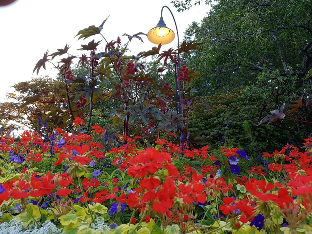 Beautiful colored flowers at Butchart Gardens